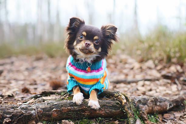 patrones ropa de perro para imprimir