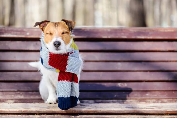patrones ropa de perros chihuahua