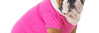 Patrones ropa de perro
